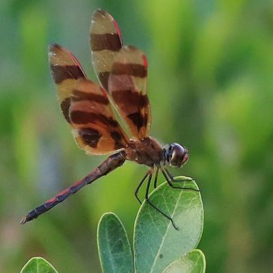 Dragonfly Summer 2017