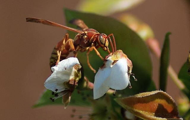 Wasp (2.0) Mar 15, 2017 copy